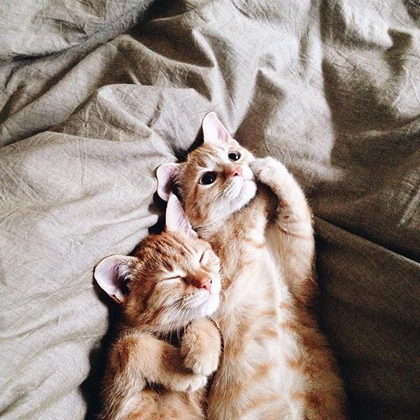 Mỗi bức ảnh về đôi mèo đáng yêu đều nhận được hàng nghìn lượt like.