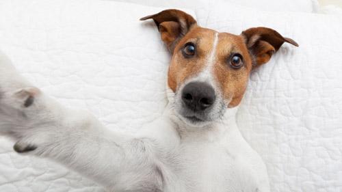 """Cũng như các cô gái, """"nàng chó"""" này cũng muốn có một kiểu """"tự sướng"""" trên giường"""