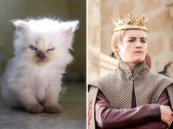 Joffrey Baratheon (Game of Thrones) đừng nghĩ chỉ có mỗi mình sở hữu kiểu nheo nheo mắt