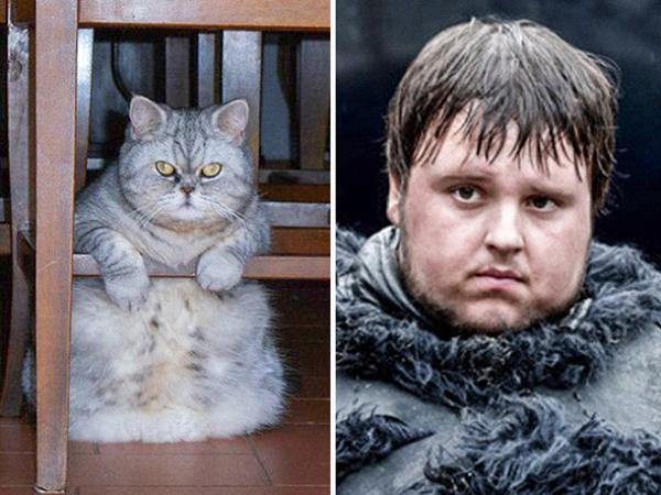Cùng sở hữu khuôn mặt tròn, đôi mắt to nhiều cảm xúc, thân hình mũm mĩm,đây chắc hằn là anh em sinh đôi thất lạc của Samwell Tarly (Game of Thrones