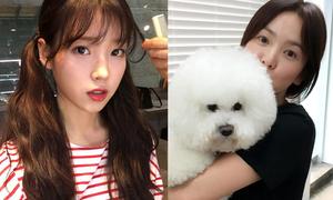 Sao Hàn 30/7: IU buộc tóc 2 bên như nữ sinh, Song Hye Kyo da trắng mịn