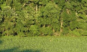 Thợ săn đại tài mới tìm thấy các chú hươu (2)
