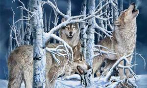 Bạn là 'thánh soi' nếu biết được tổng số con sói trong hình