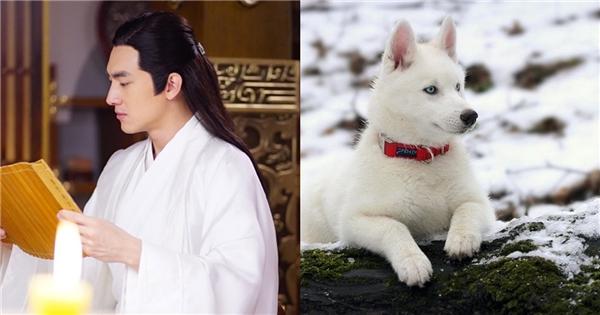 Đến nàng Tinh Nhi - Triệu Lệ Dĩnh cũng nói: Lâm Canh Tân đương nhiên là chó, giống Husky ấy. Trong một buổi họp báo Sở Kiều truyện, Nguyệt công tử còn tặng cho Tinh Nhi một chú chó cơ mà!