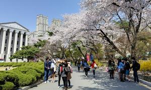 4 ngôi trường 'nhìn là muốn đi học' ở Hàn Quốc