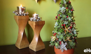 Tự tạo cây thông Noel tươi xanh đầy sức sống