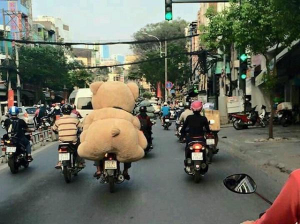 Gấu đã có, xin gió cứ về!