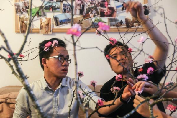Các bạn trẻ tỉ mỉ gắn từng bông hoa đào lên cây