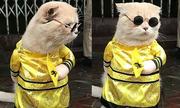Chú mèo tên Chó 'ngầu nhất Việt Nam' gây sốt báo quốc tế