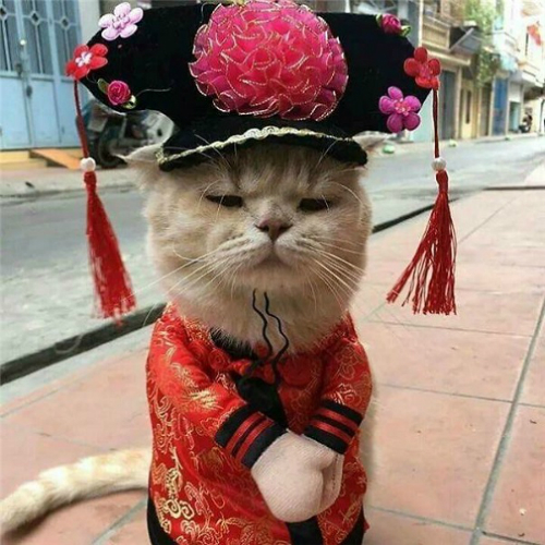 Chú mèo mặt ngầu nhất vịnh Bắc bộ được lên tạp chí quốc tế - 4