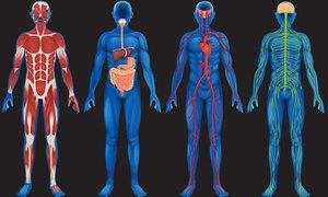 Những điều chứng minh cơ thể con người là kiệt tác phi thường