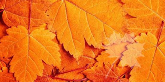 Thị lực siêu sắc bén mới nhìn thấy chiếc lá ẩn trong hình