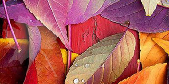 Thị lực siêu sắc bén mới nhìn thấy chiếc lá ẩn trong hình - 1