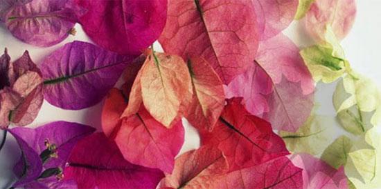Thị lực siêu sắc bén mới nhìn thấy chiếc lá ẩn trong hình - 3