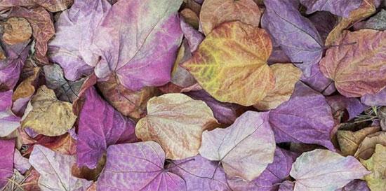 Thị lực siêu sắc bén mới nhìn thấy chiếc lá ẩn trong hình - 5