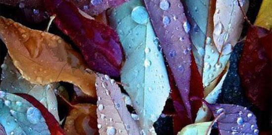 Thị lực siêu sắc bén mới nhìn thấy chiếc lá ẩn trong hình - 6