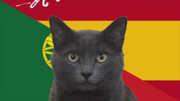 Nhà tiên tri Cass the Cat.