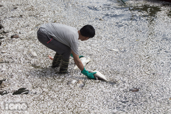 <p> Cá chết phủ trắng cả một góc hồ. Phần lớn là cá nhỏ nhưng cũng có nhiều con cá to chết rải rác ở ven hồ, tập trung nhiều ở phía đường Trích Sài.</p>