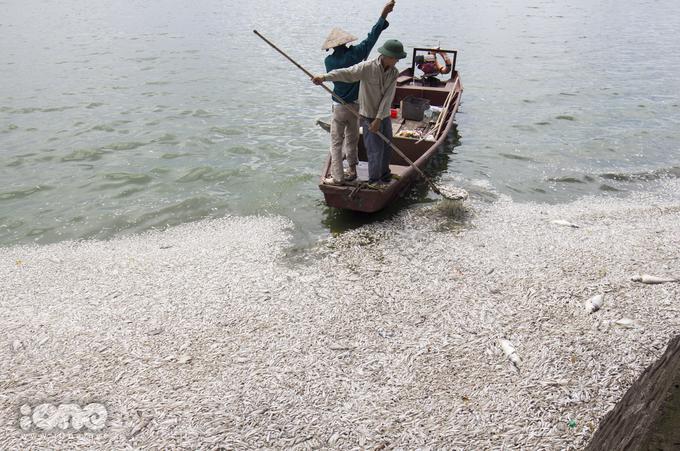 <p> Quận Tây Hồ huy động gần 100 người thuộc nhiều lực lượng như công nhân môi trường, thanh niên tình nguyện, dân quân tự vệ vớt cá chết.</p>