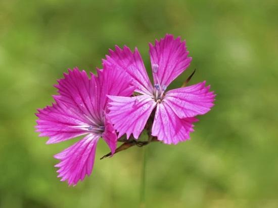 Các loài thực vật này có tên tiếng Anh là gì? (2) - 1