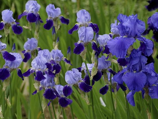 Các loài thực vật này có tên tiếng Anh là gì? (2) - 4