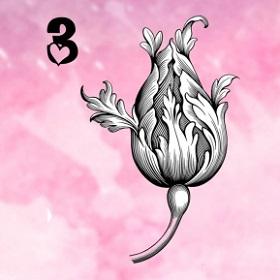 Trắc nghiệm: Khám phá ngôn ngữ tình yêu của bạn qua loài hoa ưa thích - 2