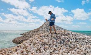 Hòn đảo được tạo từ hàng triệu vỏ ốc xà cừ