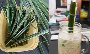 Ống hút bằng lá dừa được yêu thích ở Philippines