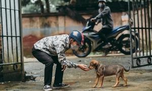 Bộ ảnh lên án nạn trộm chó của nhóm bạn trẻ