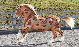 Những chú ngựa được xén lông ngoạn mục