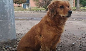 Chó đợi chủ một năm ngoài nhà tù