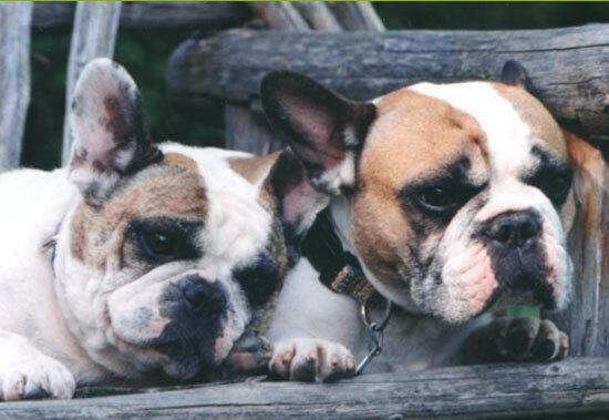 Chủ nhân nổi tiếng của những chú cún này là ai? - 1