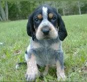 Đâu là chú cún con của giống chó này? - 29