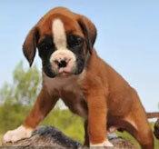 Đâu là chú cún con của giống chó này? - 35