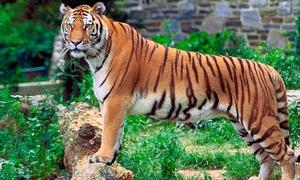 Bạn có biết loài động vật biểu tượng cho mỗi quốc gia?