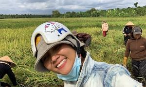 H'Hen Niê về quê gặt lúa