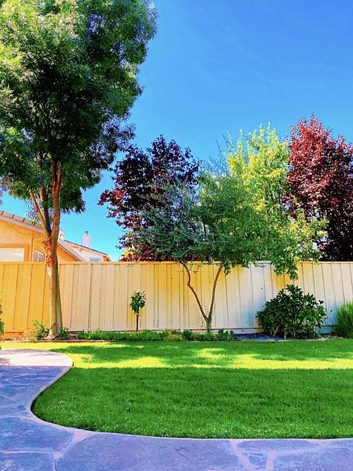 Khoảng sân trước nhà thường được Phạm Hương chia sẻ. Cô cho biết bản thân yêu khu vườn, khí hậu tại Mỹ.